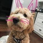 Imagen Easter Traditions