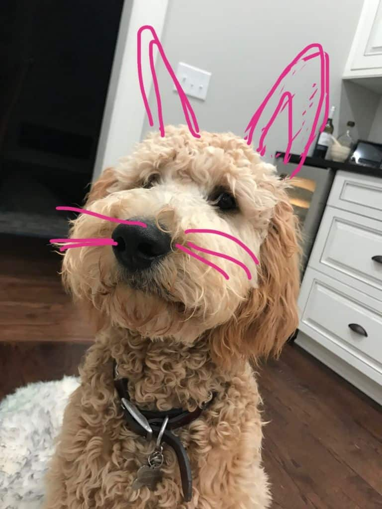 Imagen Easter Traditions Omaha Cosmetic Surgery